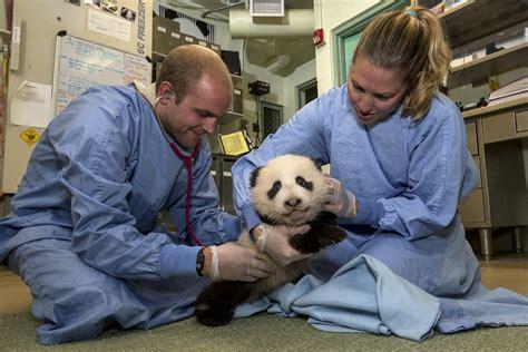 veterinarian livebinder