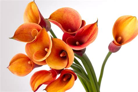 s day flowers s day flowers flower meaning