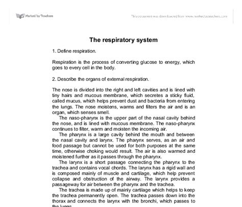 Respiratory System Essay by The Respiratory System Gcse Science Marked By Teachers