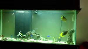 75 gallon saltwater fish tank!   YouTube