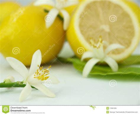 fiori limone fiori limone e frutta limone immagine stock