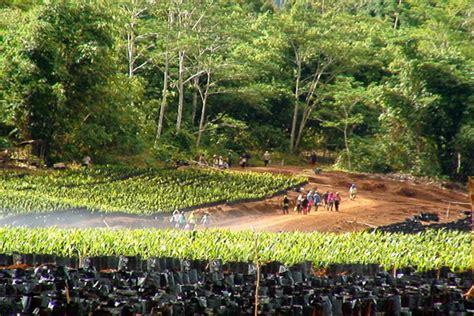 Minyak Kelapa Di Pasar sawit sebagai unggulan indonesia di pasar global palm