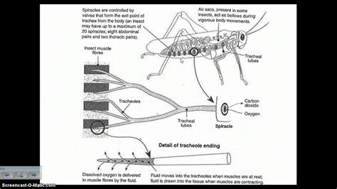 b18b1 engine wiring harness diagram b18b1 motor mounts