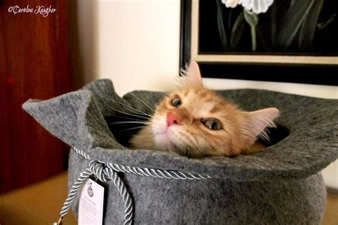 How To Keep Cat Sofa by How To Keep The Cat The Sofa Quora