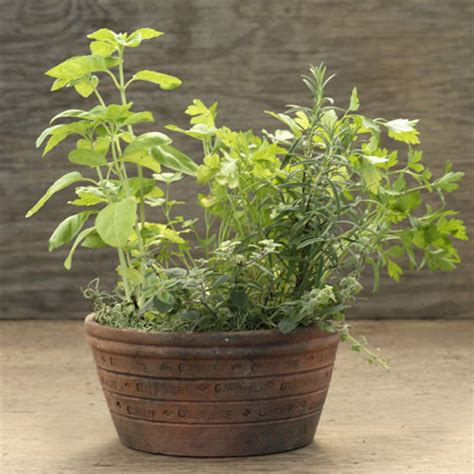 indoor herb gardens  wonderful housewarming gifts