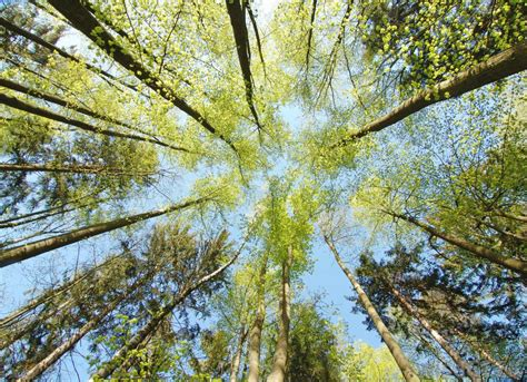 What Is A Tree Canopy What Is The Forest Canopy With Pictures