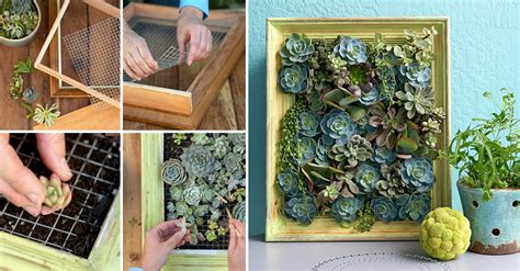 how to make living succulent picture diy crafts handimania