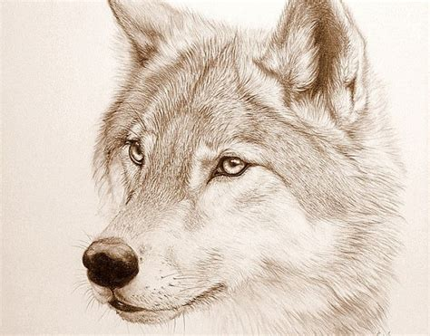 imagenes lobo blanco perro lobo blanco ejemplos de dise 241 os para tus tatuajes