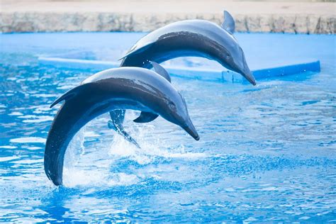 how does a live where and how do dolphins live lifestyle9