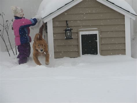 winter proof dog house protecting your outdoor pets during winter