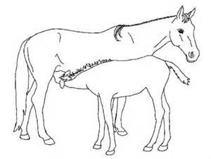 ausmalbilder pferde mit fohlen kostenlos malvorlagen zum ausdrucken affefreund