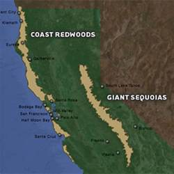 redwood forest location comic vine