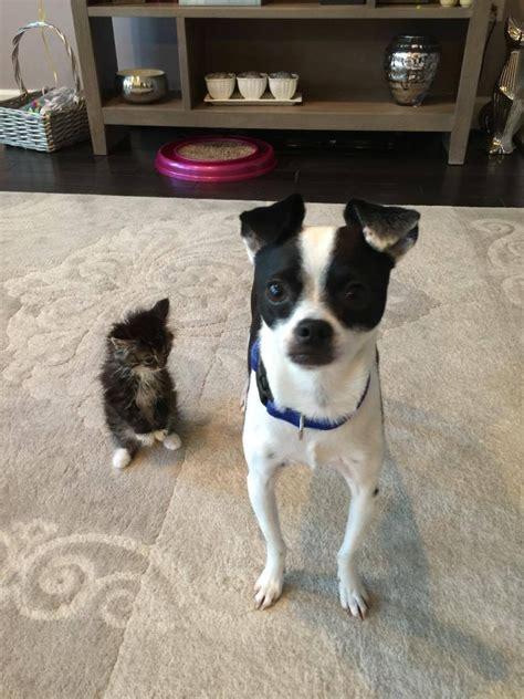 Mengenal Dan Menyayangi Anjing Dan Anak Anjing kucing tanpa sendi siku tetap memiliki kualitas hidup