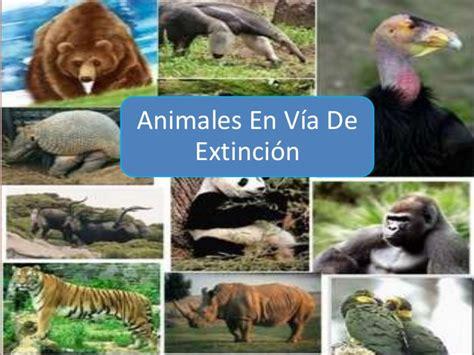 imagenes de animales en peligro de extincin 07 view image animales en via de extincion