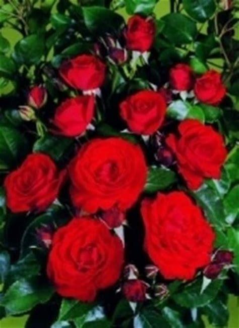 il linguaggio dei fiori il linguaggio dei fiori significato dei fiori