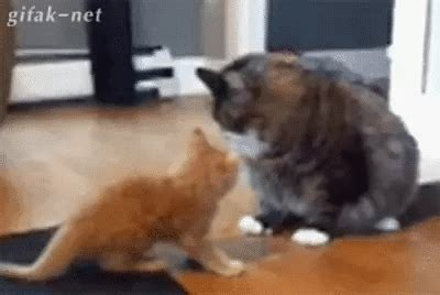 Really Small Is The New Big by Cats Gif Find On Giphy