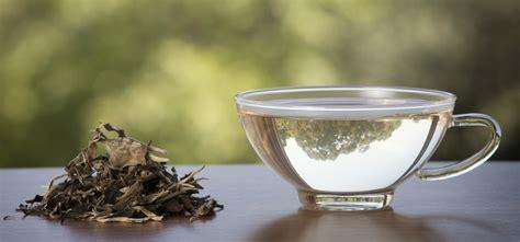 Teh White Tea health benefits of white tea 1mhealthtips