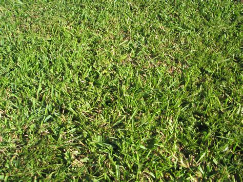 how to plant centipede grass and caring for centipede grass