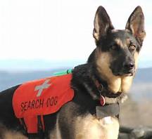 Image result for dog rescue