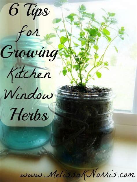 kitchen herbs 6 tips for growing kitchen windowsill herbs melissa