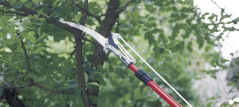 how to trim trees prune trees and shrubs