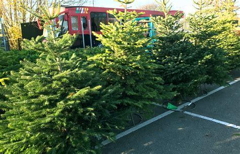 berkeley christmas trees gloucestershire 2017