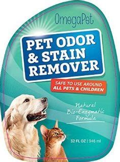 how to get dog vomit smell out of couch 1000 images about how to get rid of dog smell out of