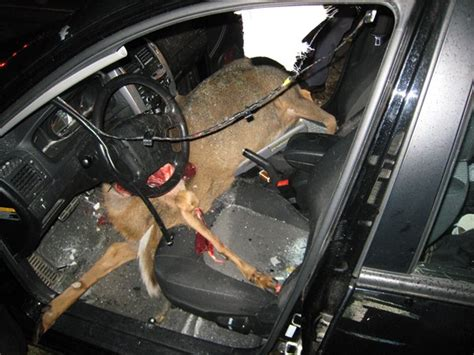 smart car deer deer can wreck your day and vehicle page 2