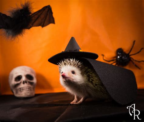 Pumpkin Halloween Costume Baby - hedgehog halloween photographs happy hedge o ween