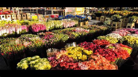 mercato dei fiori di pescia mefit il nuovo mercato dei fiori di pescia