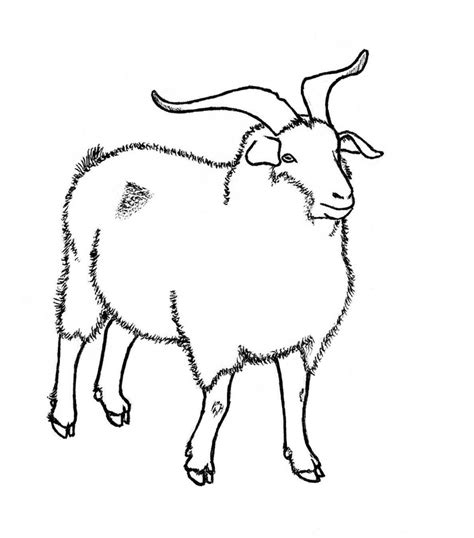 boer goat coloring page nubian goat coloring pages www imgkid com the image