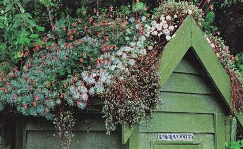 Living Roof Shed by Green Roof Inspiration Nifty Homestead