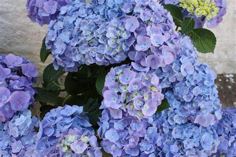 sfondi di fiori sfondi di fiori educazione ambientale a scuola