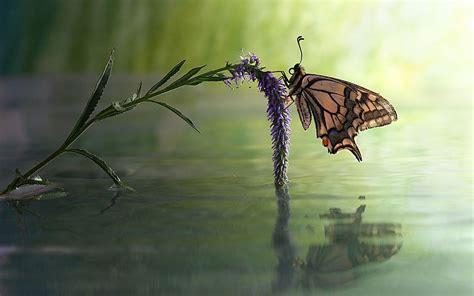 butterfly flower water reflect wallpapers butterfly