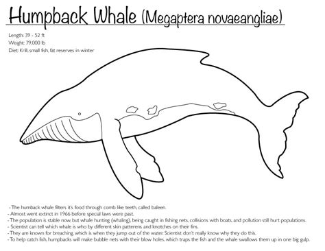 humpback whale coloring page by finwitch on deviantart