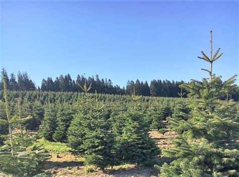preise weihnachtsbaum 28 images weihnachtsbaum preis