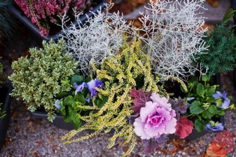 fiori da davanzale fiori da davanzale 28 images decorazione domestica