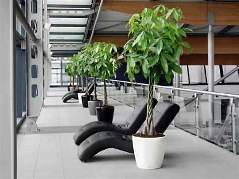 Vase Rental Pachira Office Plant