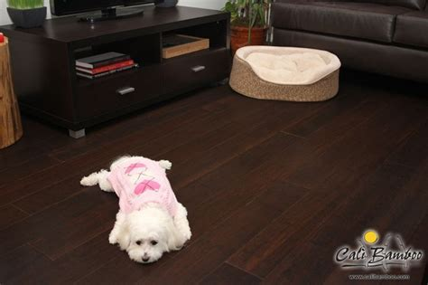 Maltese on Fossilized? Coffee Cali Bamboo floor   Pet