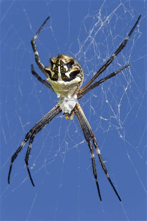 Garden Spider Southern California Photographs By Chappell
