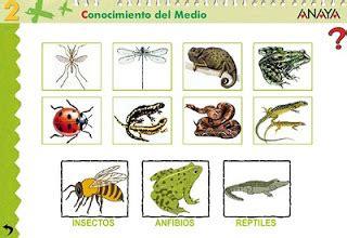 insectos anfibios y reptiles 8499281370 tema 6 hay diferentes animales segunclablog