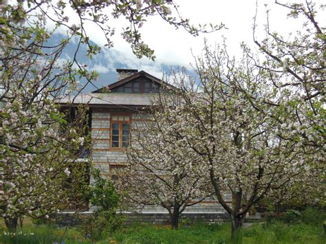 Tree Cottage Manali by Apple Tree Cottage At Manali Best Honeymoon Cottages In