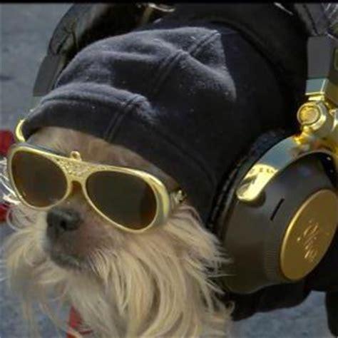 puppy with headphones with headphones wallpaper