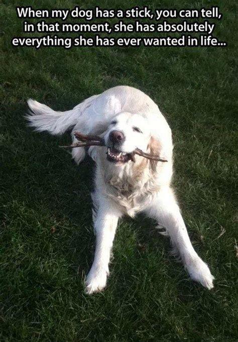 dog   stick      moment
