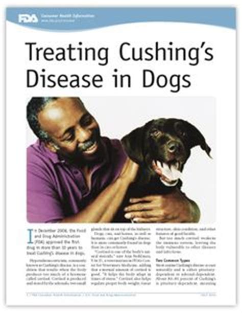 when to put a with cushing s disease dr marty becker shares common signs of canine hyperadrenocorticism which occurs when
