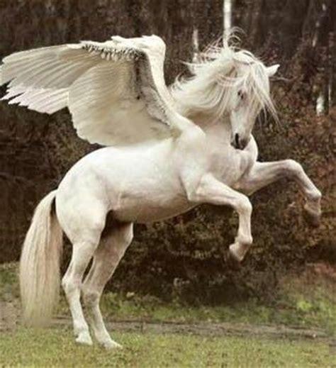 imagenes de personas mitologicas white pegasus wish they were real pets animals