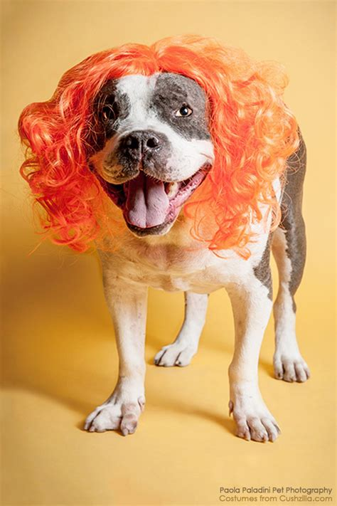 oranges for dogs wig cat wig cushzilla orange wig for dogs cats