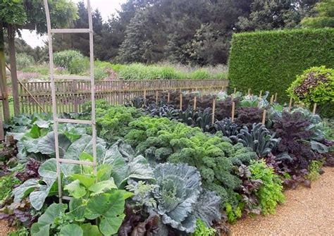 top 28 starting a veggie patch 5 steps to starting a