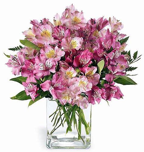 imagenes flores astromelias detalle de productos floristeria online floresfinas cl