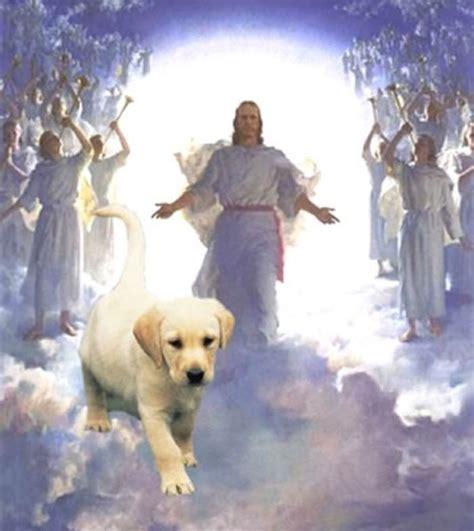 jesus in dogs 1000 images about dogs in heaven on rainbow bridge the rainbow bridge